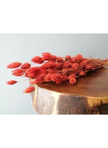 Kuru Çiçek Deposu Kuru Çiçek Kuş Otu (Palaris Otu) Nar Çiçeği Rengi Kırmızı